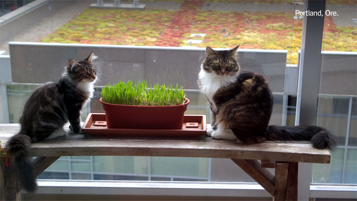 Two cats sitting on a table next to a potted plant by the window